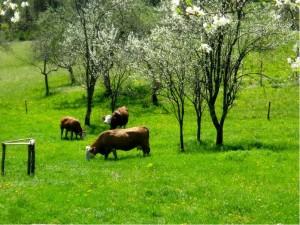 Tradicionalna živinoreja