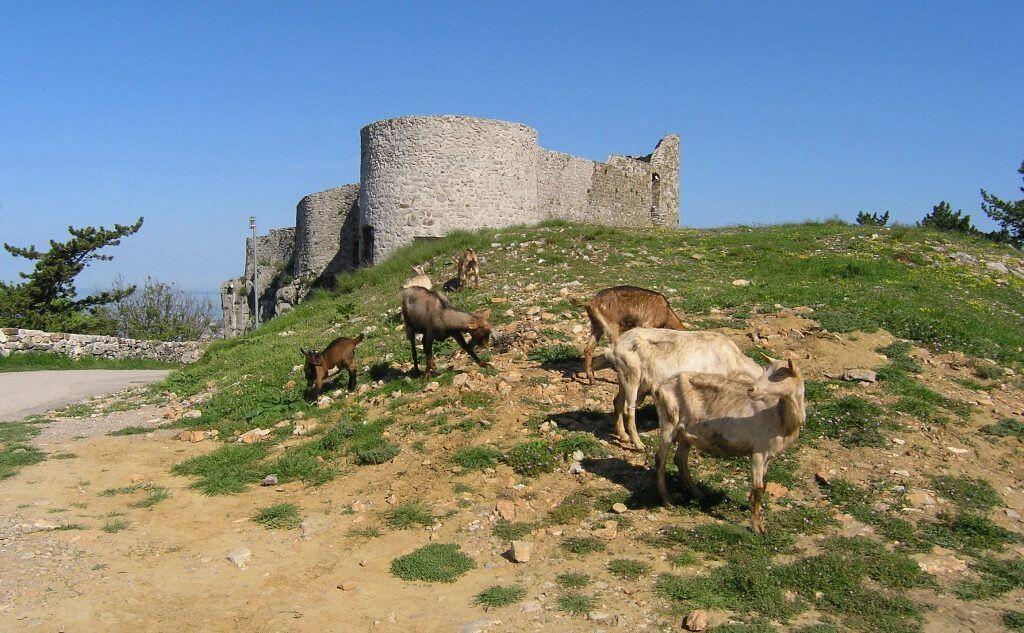 Istrska koza