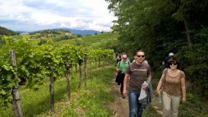 Sprehod med vinogradi
