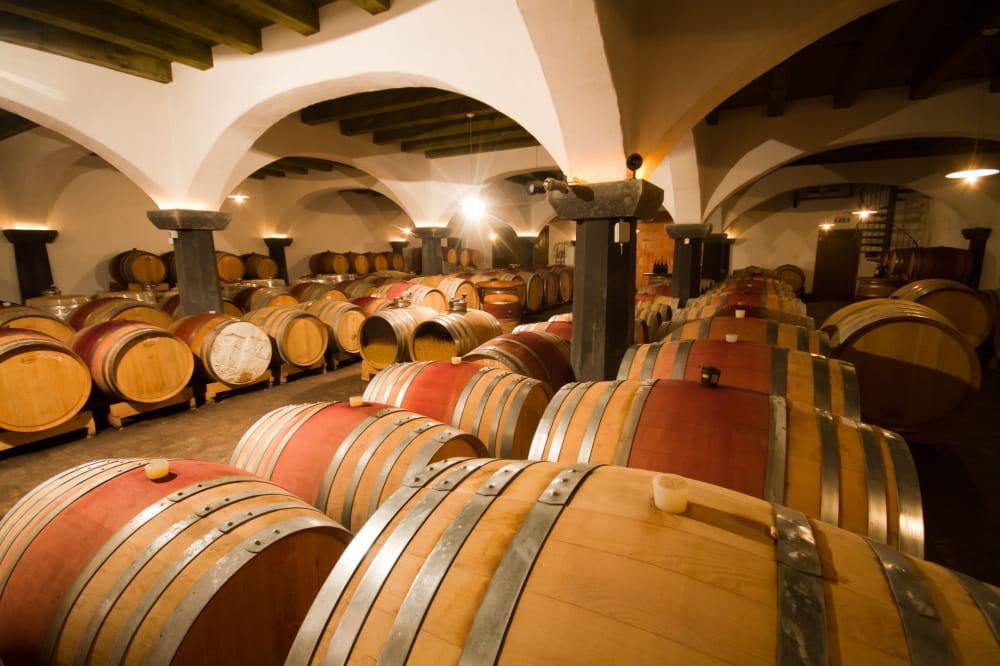 Ogled vinske kleti