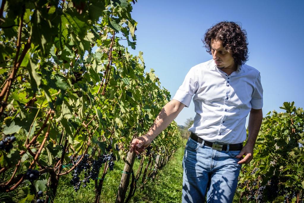 Med vinograde z vinarjem